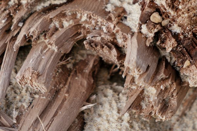 How To Manage A Termite Problem In A Rental Pinstripe Magazine